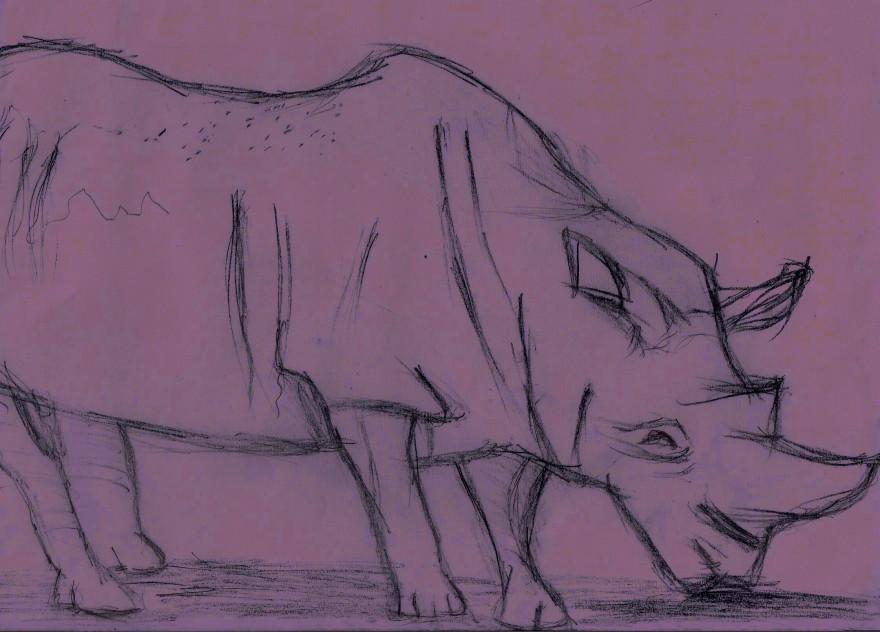 rhinoface